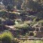 Autumn garden at Wisley
