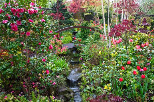 Spring at Four Seasons