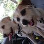 The boyz - Scruffs & Buddy
