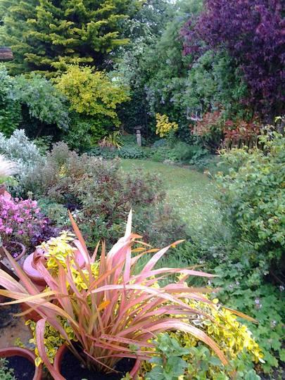 Bottom garden in the rain