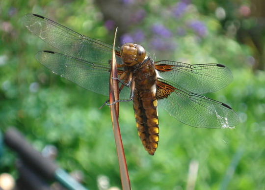 Never smile at a dragon fly?