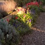 Front border in evening light.