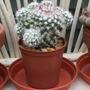 Nameless cactus