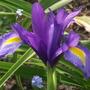 Blue Majic