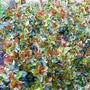 Ugni molinae - Chilean Guava (Ugni molinae)