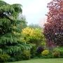 Corner of the Garden This Evening