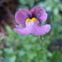 Another_scottish_wild_flower