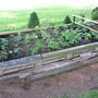semi sun veg garden