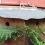 sparrow terrace nestbox