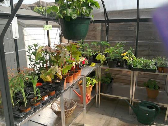 Inside greenhouse in early June