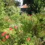 poppy corner