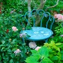 Roses Salvia Allium and French chair under Olive tree....
