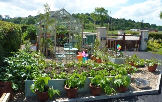 Veg. garden - I love this so much! :)