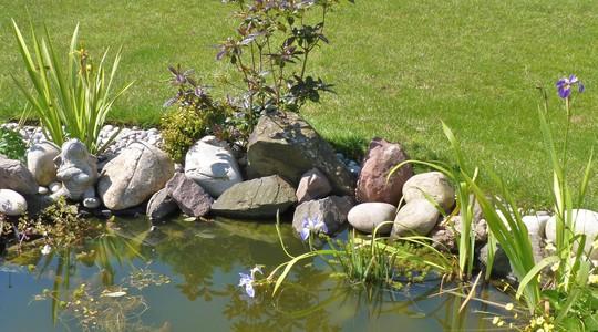 Three Iris at the pond....
