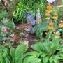 Primulas candelabra still blooming