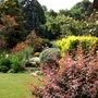 View across garden through the berberis.