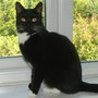 Introducing Zola who is a rescue cat and in the last 10 months with us she has become my constant shadow in the garden.