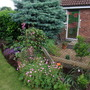 Lavatera, geranium and hiding an orange lily.