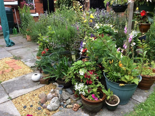 Summer containers 3