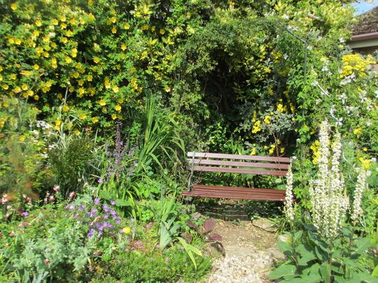 The Evening Sun Seat (Elaeagnus pungens maculata)