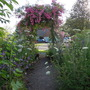 rose arch in 4th year
