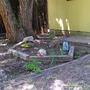 Shade Garden June 2007 (Aquilegia 'McKana's Giant')