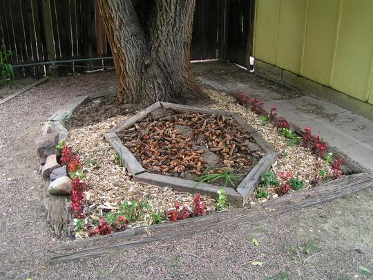 Shade Garden August 2007
