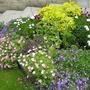 Small corner garden.