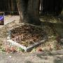 Shade Garden October 2007 (Crocus kotschyanus)