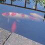 pond residents