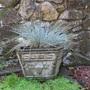 """elijah blue"" fescue ornamental grass"