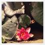 Waterlilies first flower