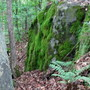 some of the mossy rocks