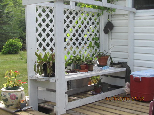A New placement for the trellis