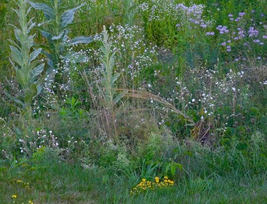 wild flowers Vermont