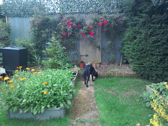 Roses in full bloom over gate to secret garden
