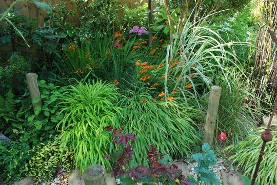 Grasses all shapes and sizes..... (Hakonechloa macra Alboaurea)