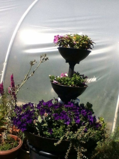 Succulents and petunias