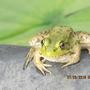Little Green Guy
