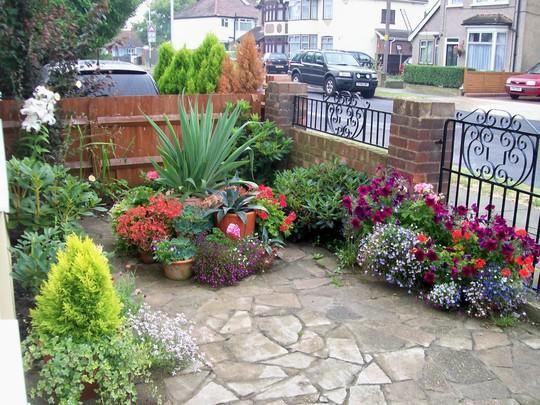 front garden in full swing!