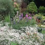 image Gypsophilla with Clary & Liatris in the background