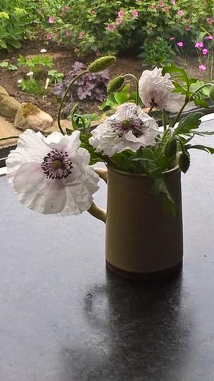 Papaver rhoeas 'Cedric Morris,my most beautiful poppy.