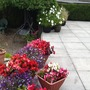My pots on the patio