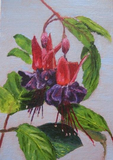 Fuschia painted in oils