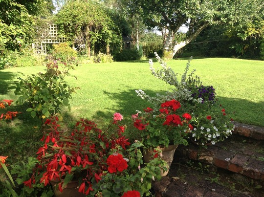 Pots of begonias, pelargoniums and fuschias in the evening sunshine.