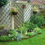 .My back garden