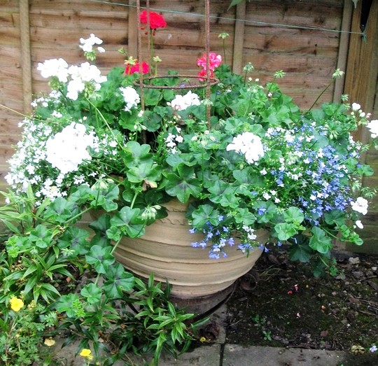 I have found that spring bulbs followed by annuals works best in this very large tub