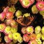 Butterfly_1Nov03.jpg