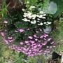image In my garden
