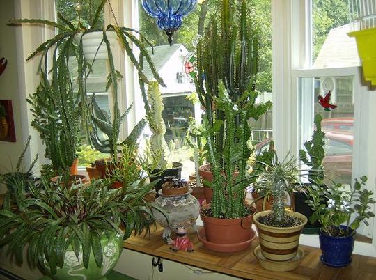 Kitchen bay window.